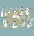 set with cute farm birds vector image