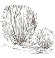 willow bushes with leaves and grass vector image vector image