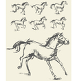 Horse Set Hand-drawn Phase of the movement vector image vector image