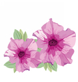 Pink Summer flowers isolated on white vector image vector image