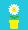 white daisy chamomile with smiling face head cute vector image vector image