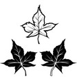black maple leaf shape outline contour icons vector image vector image