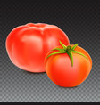 red whole tomatoes isolated on transparent vector image vector image