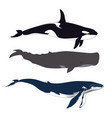 set of whales in simple realistic style vector image