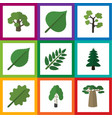 flat icon bio set of linden alder hickory and vector image vector image