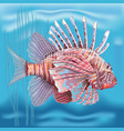 pterois radiata in an aquarium on a blue vector image vector image