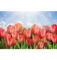 Red tulips flowers in the garden vector image