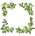 square frame with lime and lemon branches in vector image