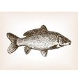 Carp fish hand drawn sketch vector image vector image