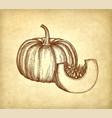ink sketch of pumpkin vector image vector image