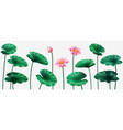 set isolated lotus leaves and flowers plant vector image