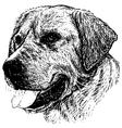 Labrador Retriever 03 1 vector image vector image