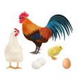 chicken realistic adult chick domestic farm vector image vector image