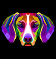 colorful vizsla dog on pop art style vector image vector image