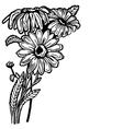 daisy bush vector image vector image