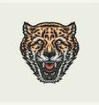 roaring cheeta vector image