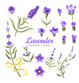 set lavender flowers elements collection of vector image vector image