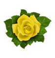 Yellow rose flower with leaves vector image