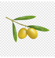 branch of olives icon realistic style vector image vector image