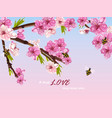 cherry flowers spring card background vector image vector image
