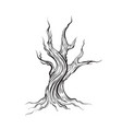 dead tree made in hand drawn style line hand vector image