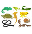 reptile and amphibian set chameleon frog turtle vector image