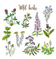 wild herbs set vector image