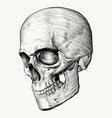 skull hand made vector image vector image