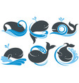 whales with splash of water vector image vector image