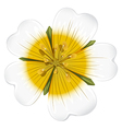 A white blooming flower vector image vector image