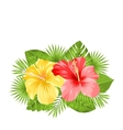 beautiful colorful hibiscus flowers blossom vector image vector image