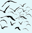 Birds flying in the sky vector image vector image