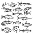 freshwater and ocean fish vector image vector image