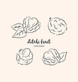 litchi fruit drawing lychee sketch vector image vector image