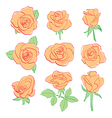 orange red roses - set vector image