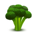 realistic 3d detailed green fresh broccoli vector image