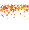 maples background with copy space vector image vector image