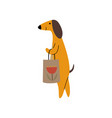 purebred brown dachshund dog with shopping bag vector image vector image