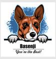 basenji - peeking dogs - breed face head isolated vector image vector image