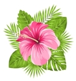 beautiful pink hibiscus flowers blossom vector image