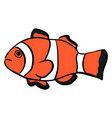 clownfish on white background vector image