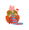 cute pig grandmother character sitting in cozy vector image