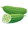 fresh cucumbers vector image