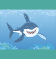 great white shark over a reef vector image vector image