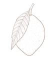 lemon hand drawn outline sketch vector image