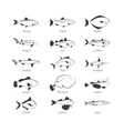 Seafood icons Fish icons vector image vector image