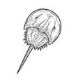 xiphosura horseshoe crab sketch vector image