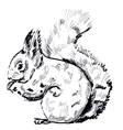 hand drawn squirrel on a white background vector image vector image