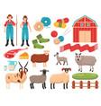 sheep breeding farm set vector image