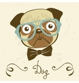 Dog gentleman of an elegant pug vector image